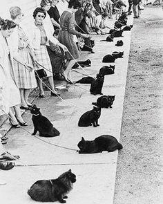 Audizione per la parte di un gatto nero. Hollywood,1961 #audizione #gatto #cat #catgram #catsworld #catsofinstagram #vintagephotography #1961 #photographypassion #bnw_society #bnw_life #fotoinbiancoenero #vintage #lefotochesegnano #epoque #epoca #gattonero #blackcat #followme #hollywood #igersbnw #ic_bnw