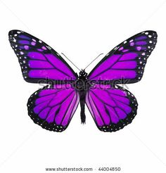 butterfly images - Google Search