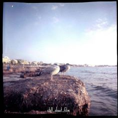 Photo taken in seafront of Alghero, in Sardegna. Love this place. Love the sea. Love shooting film.   Film photography by Valentina Spanu.  Camera: Diana F+ Film: lomography color negative, 400 iso.   Never stop believing in film!