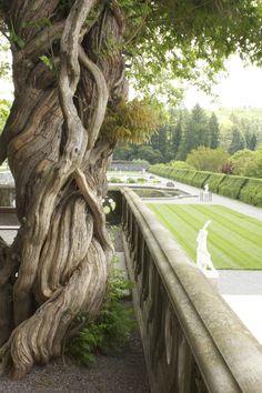 Twisted Tree at the Biltmore Estates in Asheville, North Carolina