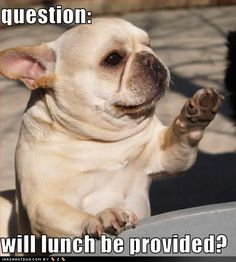 funny pictures of dogs with captions
