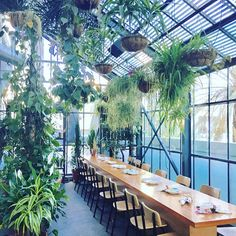 Friday drinks in a greenhouse = perfection #jungalowstyle