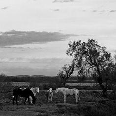 R0011_Camargue_06_2_sd30x30 by sandro.m, via Flickr | black white grey + landscape + horses + film