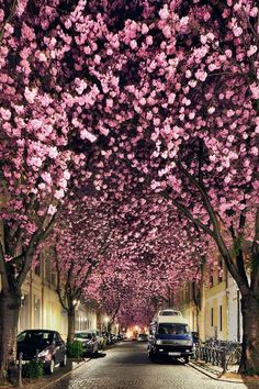 LOVE the color of the trees! ilaurens: Cherry Night - By: Kilian Schönberger