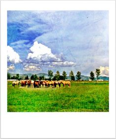 Mother Horses Watching Over Their Foals photo print by HeatherZahnGardner Horse Watch, Horses, Etsy Shop, Art Prints, Photography, Painting, Vintage, Art Impressions, Photograph