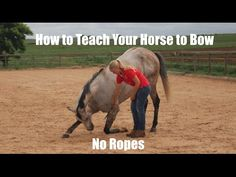 How to teach your horse to bow (no ropes) - YouTube
