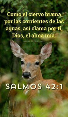 Christian Verses, Christian Devotions, Jesus Christ, God, Humor, Faces, David, Life, Word Of God