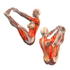 Both big toes pose - Ubhaya Padangusthasana - Yoga Poses | YOGA.com