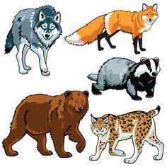 Векторный набор диких животных графический дизайн 01