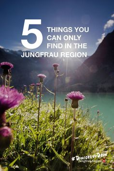 Check out 5 THING YOU CAN ONLY FIND in the Jungfrau Region! 🚇🚠🏔️  #Grindelwald #Wengen #Lauterbrunnen #Haslital #Hiddengems #jungfrauregion #madeinbern #inLOVEwithSWITZERLAND To Go, How To Make, Grindelwald, 5 Things, Cover, Social Media, Canning, Instagram, Check