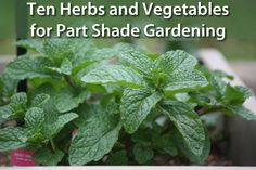 10 Best Herbs and Vegetables to Grow a Beautiful Shade Garden