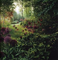 Painterly Shade Garden with Allium and Hosta | Content in a Cottage