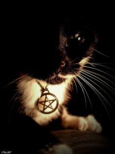 Magical cat 1    https://fbcdn-sphotos-b-a.akamaihd.net/hphotos-ak-prn1/15575_414276675312103_555826151_n.jpg