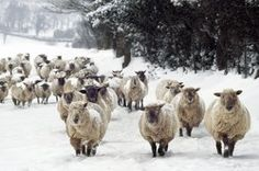 Christmas c/o Ardea - wildlife pets environment