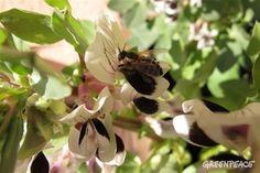 2015 es un año clave para las abejas a nivel europeo