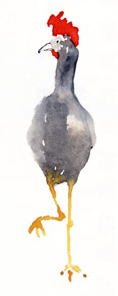 Cocky Chicken on watercolors.