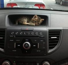 A kitten hiding in the recessed screen area of the dashboard in its owner's car.