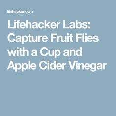 Lifehacker Labs: Capture Fruit Flies with a Cup and Apple Cider Vinegar