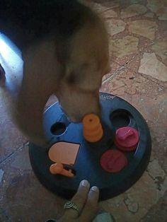 A Las Vegas le start up italiane scommettono sul cane, tra utilità sociale e giochi per quattro zampe :http://www.qualazampa.news/2018/01/16/a-las-vegas-le-start-up-italiane-scommettono-sul-cane-tra-utilita-sociale-e-giochi-per-quattro-zampe/
