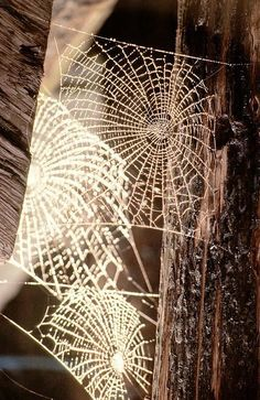 Spider web of all other spider webs...