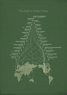 World's oldest #trees