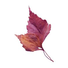 NLD AG Leaf.png ❤ liked on Polyvore featuring autumn, filler, leaf, leaves and tubes