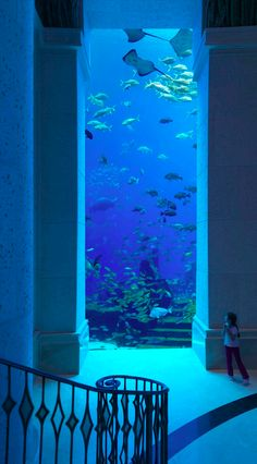 Ambassador Lagoon in Atlantis, The Palm hotel resort in Dubai • photo: Atlantis The Palm Dubai on Flickr