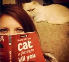 Purr Evil: Hilarious photos of the world's most sinister-looking cats wwc2 wwc2