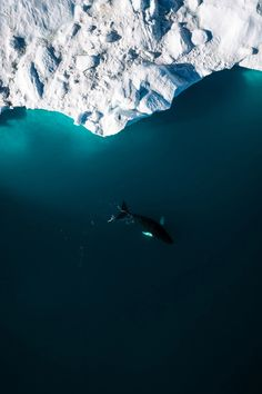 Lone Humpack Whale with Iceberg - Wildlife aerial photography by Michael Schauer. - Science and Nature Orcas, Aerial Photography, Travel Photography, Night Photography, Landscape Photography, Aerial Arts, Wale, Mundo Animal, Humpback Whale