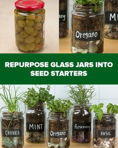Make An Adorable Herb Garden With Old Glass Jars- use resources wisely