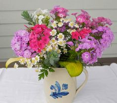 A mix of Volcano phlox with misc annuals and foliage