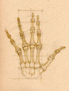 The Book of Bones Figure Drawing, Skeleton, The Book, Bones, How To Draw Hands, Hair Accessories, Ceiling Lights, Drawings, Skeletons