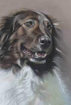 Dog art by Amy Little.  Nero, 2014.  Soft pastel on paper.