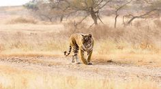 ranthambore national park travel