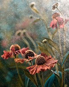 Summer in rain by Magda Wasiczek, via 500px