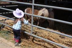 Little girl and a mini-mule