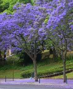 Bromélias - Flores e Folhagens