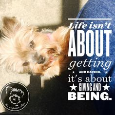 Yorkies know this rule and always follow it!   Found at: https://itsayorkielife.com/yorkies-know-this-rule-and-always-follow-it/  #Yorkie,#YorkshireTerrier,#YorkshireTerrierLove,#ItsaYorkieLife
