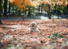 The McCartneys Photography | Parker James the Cavapoo Puppy! <3