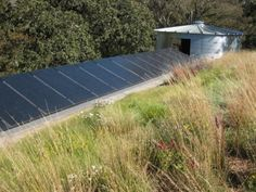 green roof with native grasses - looks very Australian