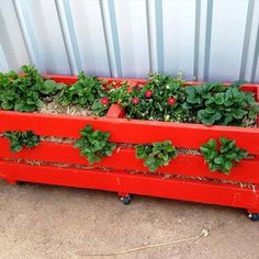 Strawberry Pallet Planters 101 Pallet Ideas decided to paint their planter red and add wheels Strawberry Planters Diy, Strawberry Garden, Strawberry Plants, Grow Strawberries, Strawberry Box, Wooden Compost Bin, Pallet Ideas Easy, Diy Pallet, Pallet Wood