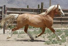 https://www.blm.gov/adoptahorse/index.php BLM wild horse and burro adoption program, bidding begins in 24 hours.
