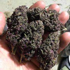 Sour Diesel a Potent Sativa Strain - Denver Flavours Marijuana Plants, Cannabis Seeds For Sale, Cannabis Shop, Indica Strains, Pipes
