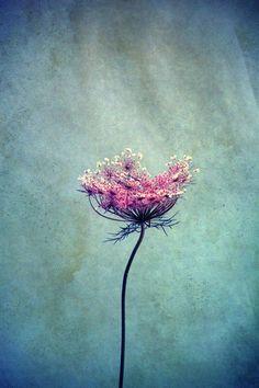 belle - Art Print by Claudia Drossert http://society6.com/artist/fraubella