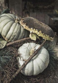 Great arrangement - I want sunflower heads