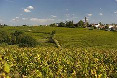 Loire Valley Wine, Road Trip France, Maine, Travel, Outdoor, Trips, Board, Vineyard, Viajes