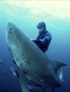 Crazy photo..one of the most dangerous sharks in the world seems to have a heart. Love this No shit...