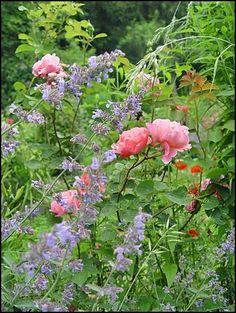Traumpaare im Beet gesucht - Seite 2 - Gartengestaltung - Mein schöner Garten online