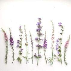 botanical_tales | Bex Partridge