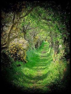 Old Road The Old Road ~ Tree Tunnel - Ballynoe, County Down, Northern Ireland.The Old Road ~ Tree Tunnel - Ballynoe, County Down, Northern Ireland. Oh The Places You'll Go, Places To Travel, Tree Tunnel, All Nature, Nature Tree, Green Nature, Nature Images, Amazing Nature, Belle Photo